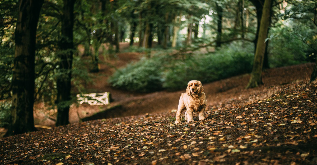 Kutyánk legyen biztosan behívható, megállítható, minden szituációban - csak így engedjük el pórázról!
