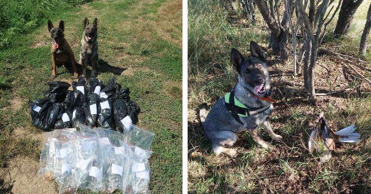 A méreg és tetemkereső kutyák nagyban segítik a csalétkek megtalálását