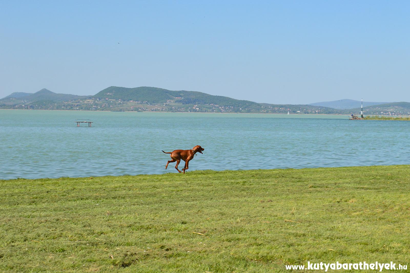 Kutyával a Balatonparton - már ez is lehetséges!