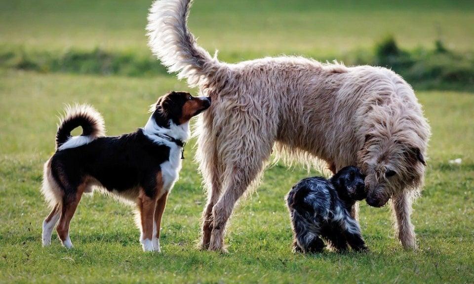 két kutya tudja,