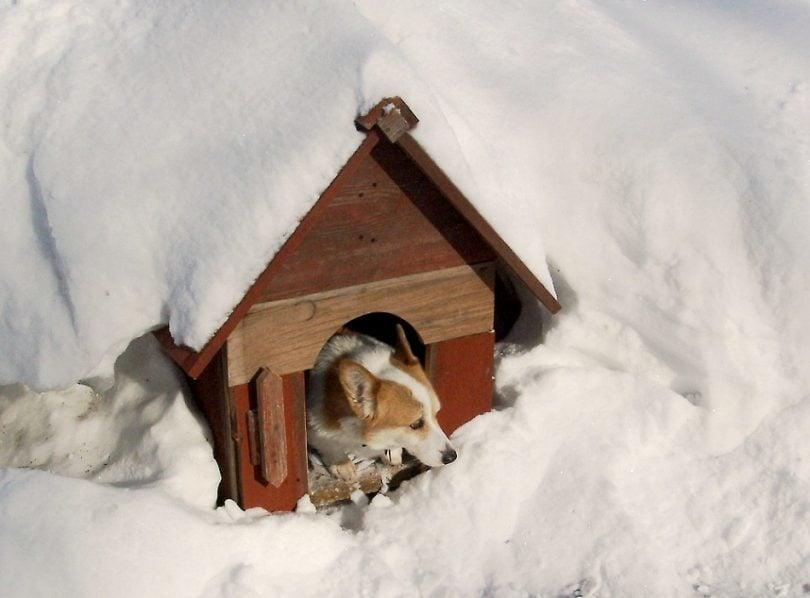 Kutyaház melegen tartása