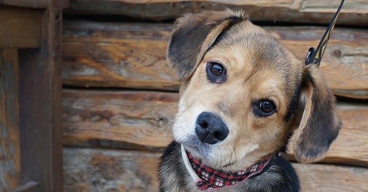race kutya társkereső)