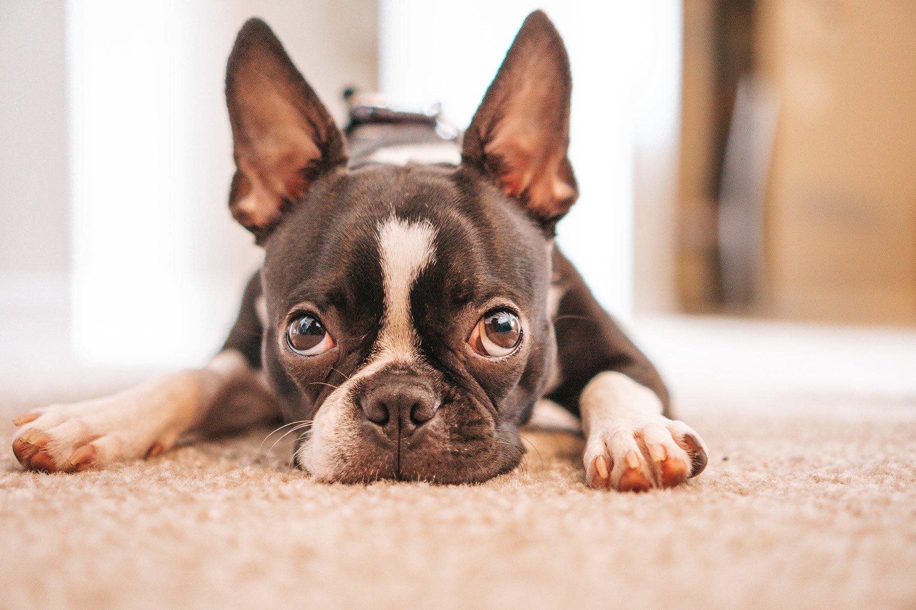 Az első lépések friss kutyatulajdonosoknak