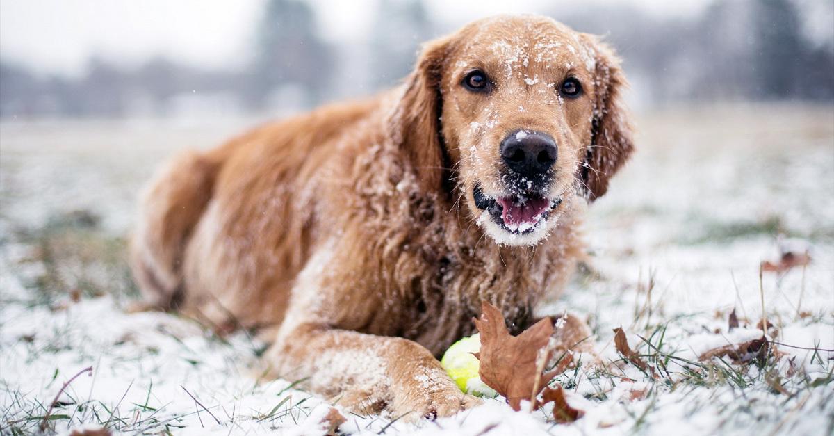 Hidegben sem maradhatnak el a kutyaséták!