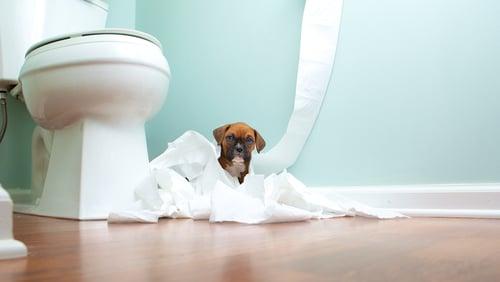 Papír - játéknak jó lehet a kutyának, de megenni....