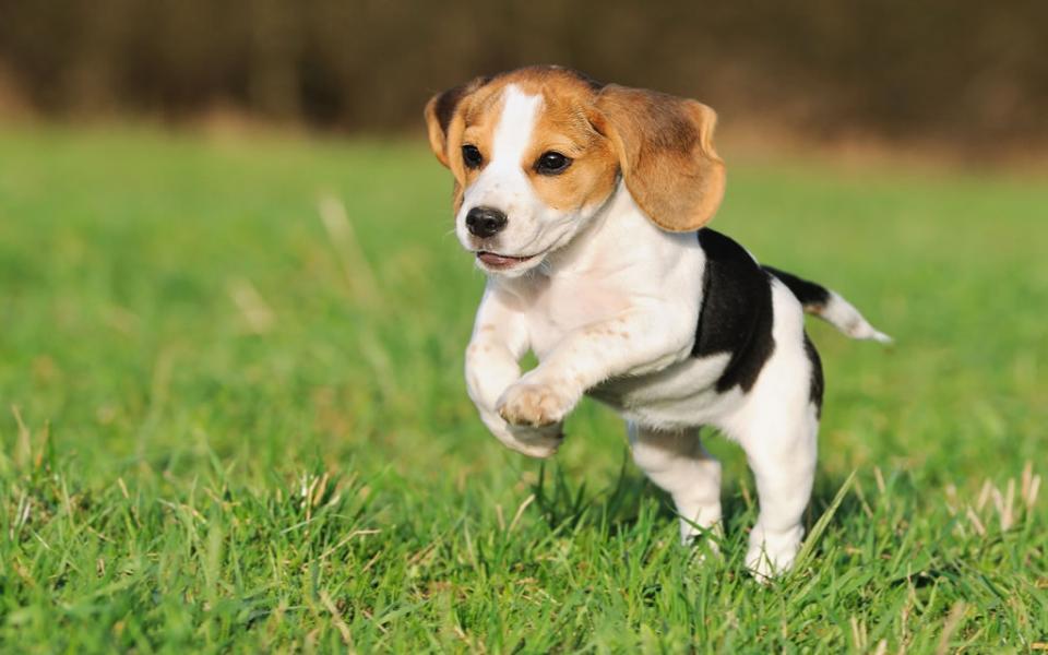 Séta a parkban vagy a természetben - egy kiskutyának is szüksége van rá
