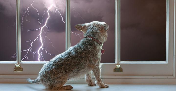 Sok kutya retteg a vihar idején