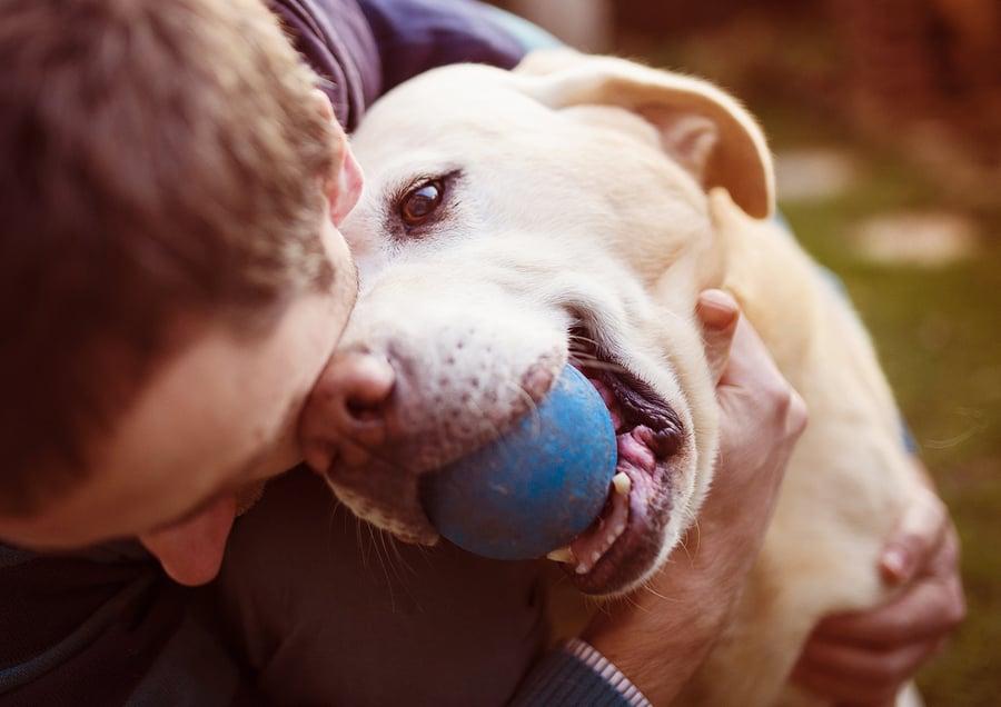társkereső oldalon, hogy szereti a kutyákat)
