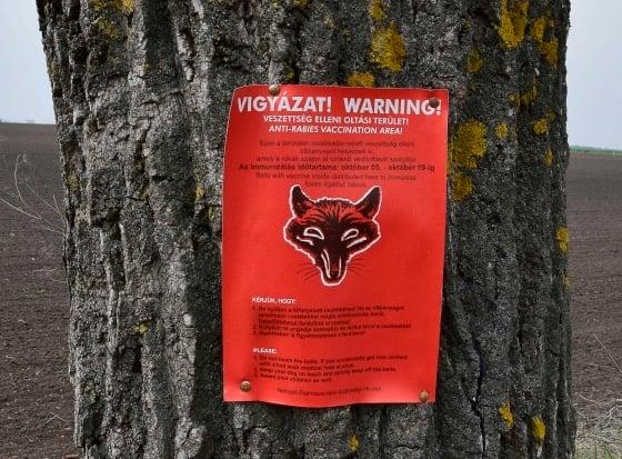 Ilyen piros plakátok hívják fel a figyelmet a veszettség elleni vakcinákra