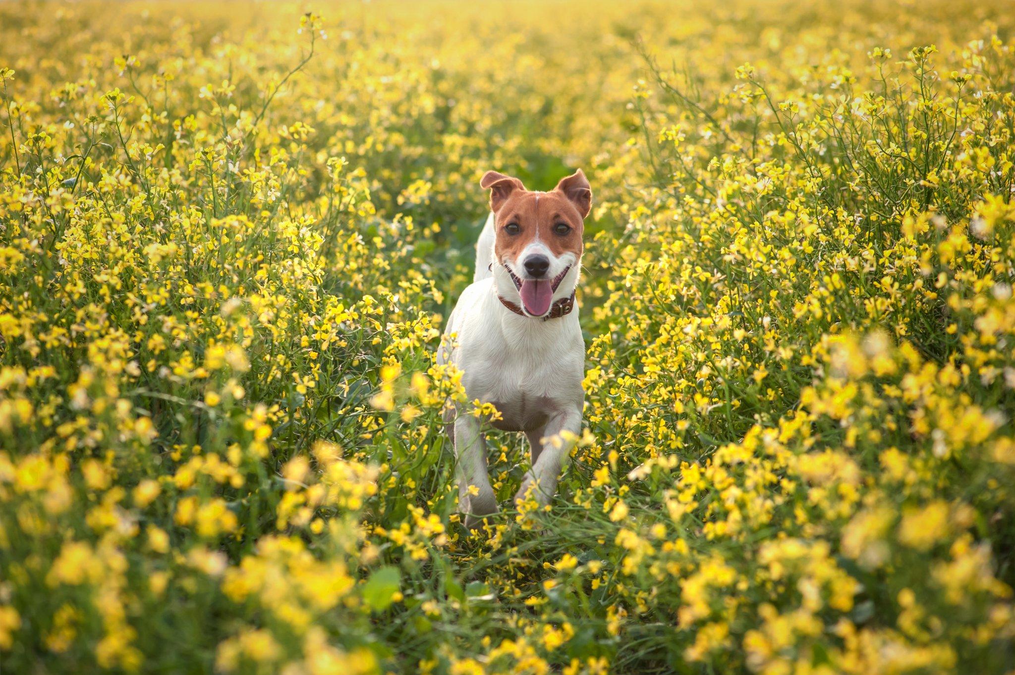 A kutya is lehet allergiás