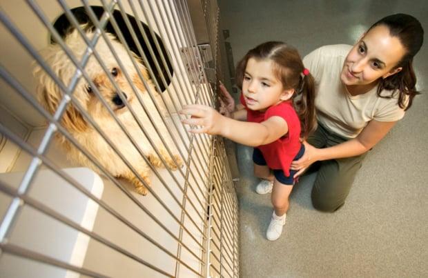 Nagyon sok kutya vár gazdára - biztosan megtalálod köztük az Igazit!