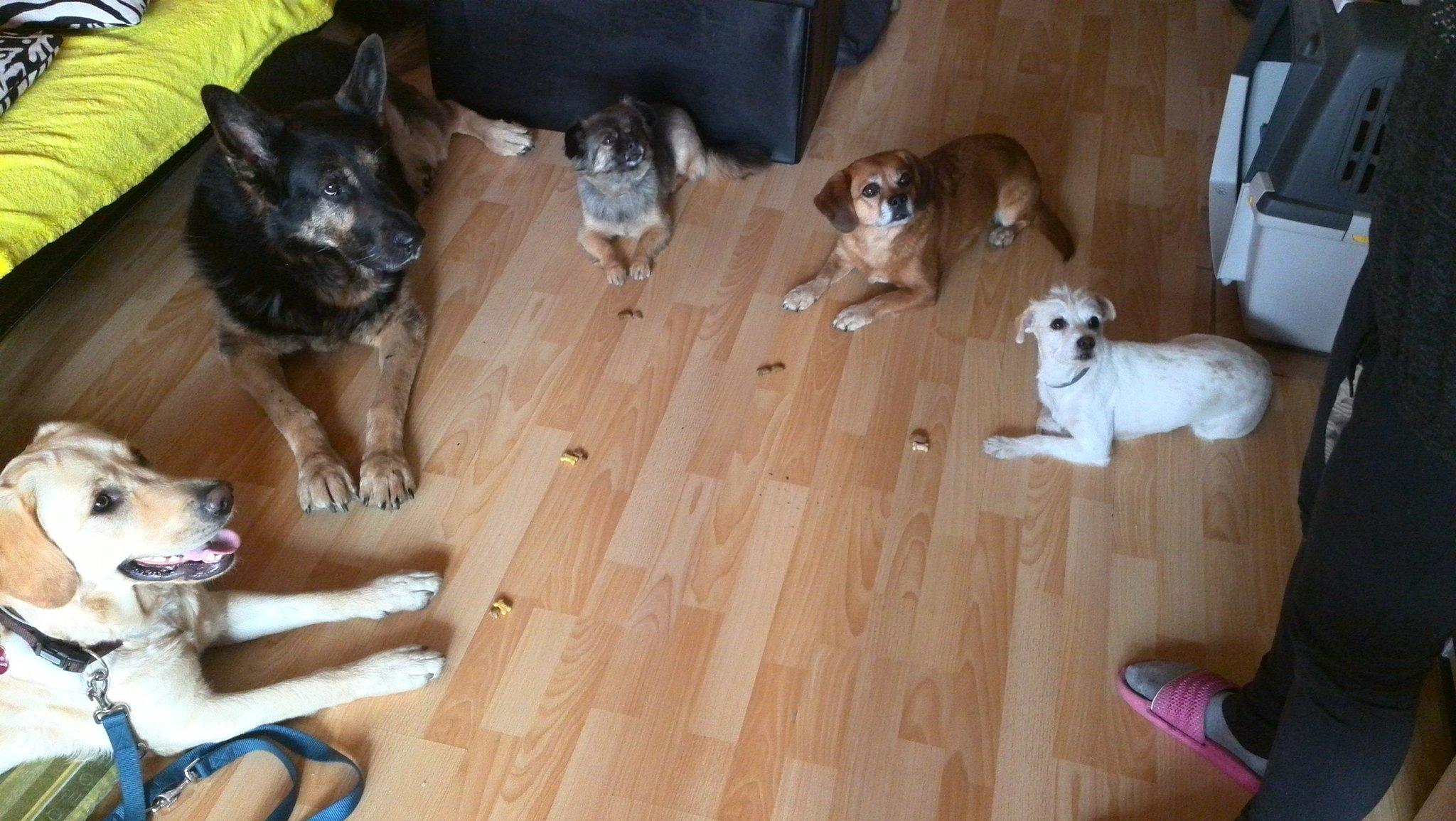 Csodarecept, varázsmódszer a kutyanevelésben – létezik?