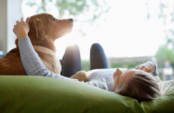 A kutyák pontosan tudják, milyen hangulatban vagyunk