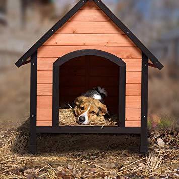 Kutyaház bélelése