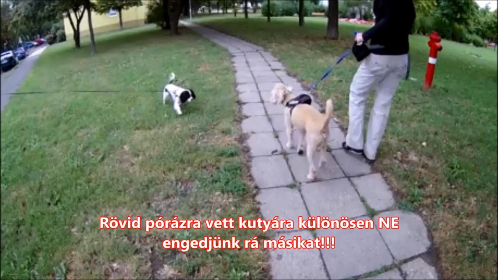 Nem véletlenül van a kutya rövid pórázra fogva: vegyük észre, hogy nem kívánják a társaságot!