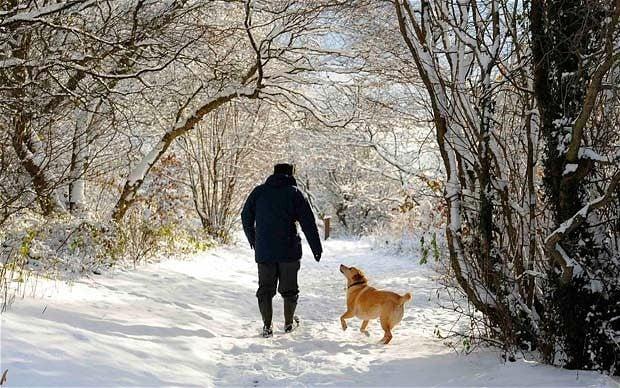 Egy kiadós sétáltatás, sok játékkal tarkítva segít fárasztani a kutyát