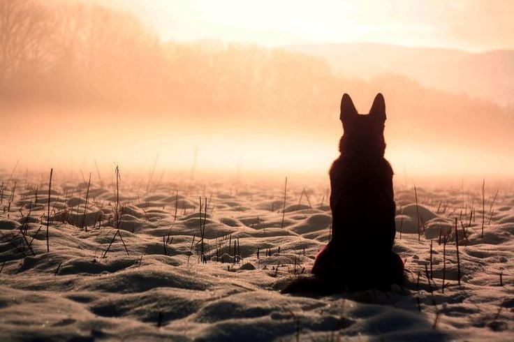 Az állatbarátok számára nem kérdés, van-e a kutyáknak lelke