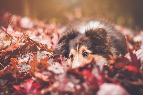 A séták, túrák alatt is találhat magának valamit a kutya