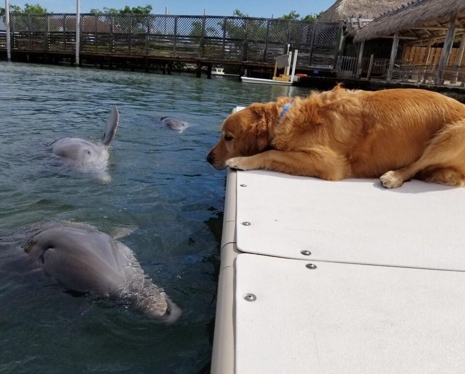 A delfin és a kutya hosszú évek óta szoros barátságot ápolnak