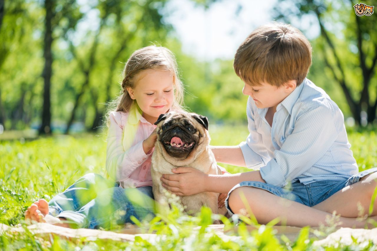 Best Dogs For Toddlers Uk