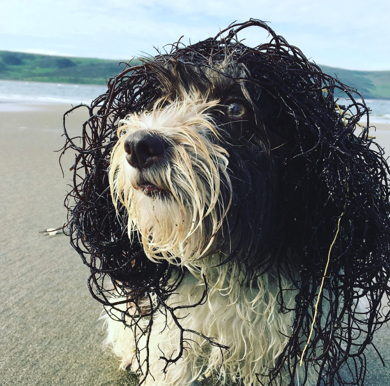 Sabine Wolpert - Sea Dog