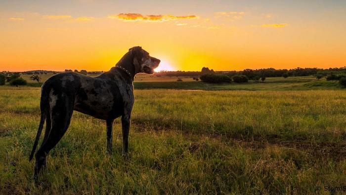 Megmutathatod az árva kutyának, milyen is a boldog Gazdis lét