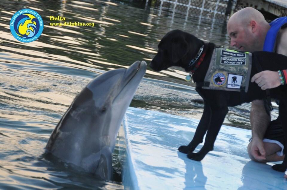 Delta, a delfin és Susie, a segítőkutya találkozása