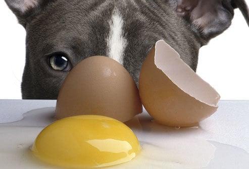 tojás szájszaga