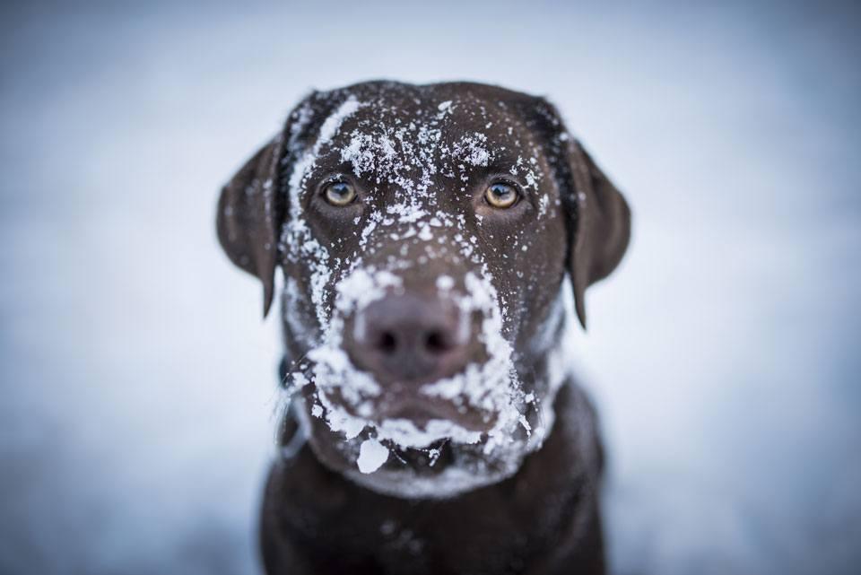 A tartós mínuszokra fel kell készülni, főleg a kinti kutyák esetében