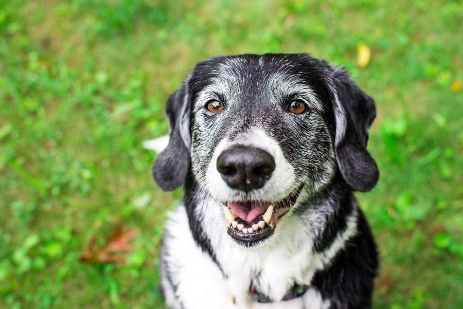 Mintha mosolyogna ez az idős kutya