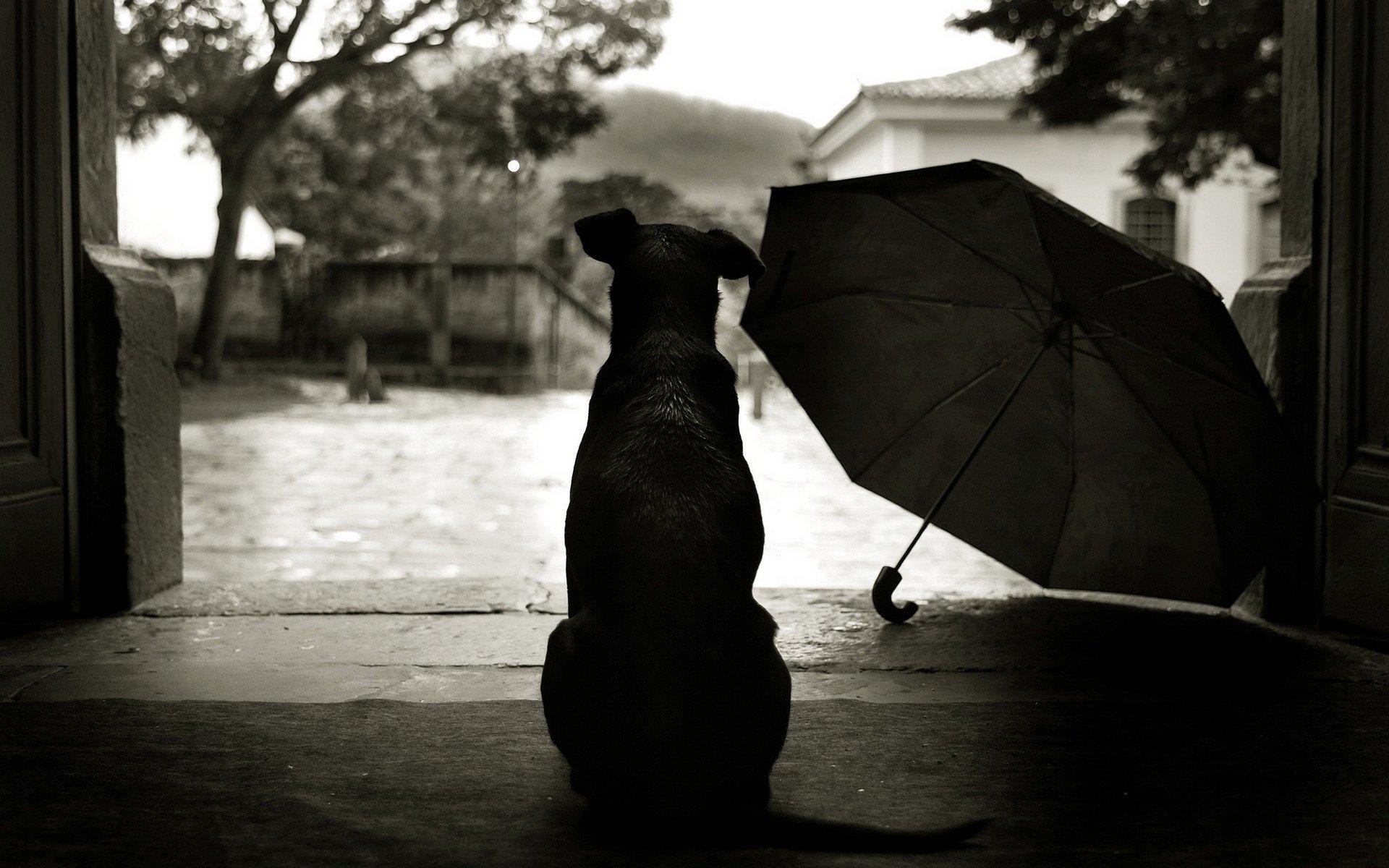 ízületek esős időben)