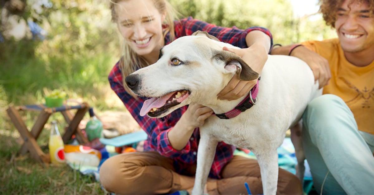 kutyával társkereső)