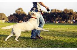 Miért is van szüksége a kutyának a kutyafuttatón kívüli sétára is?