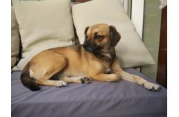 Reális és irreális elvárások a kutyázásban
