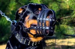 Újabb kutyatartási szigorítás Bécsben