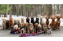 Falkában sétáltatnak kutyákat New Yorkban - minden séta után csoportkép készül a csapatról