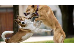 Kutyáink nem túl megbocsátóak egymással